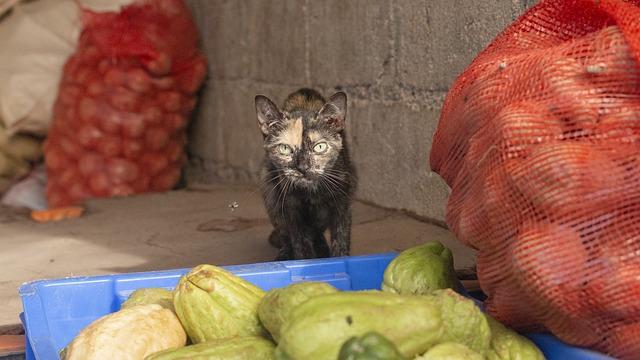 chat-mange-legume