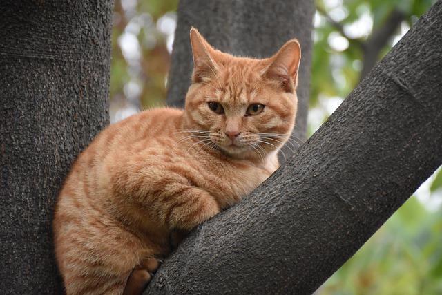 chatte qui s'enfuit dans un arbre