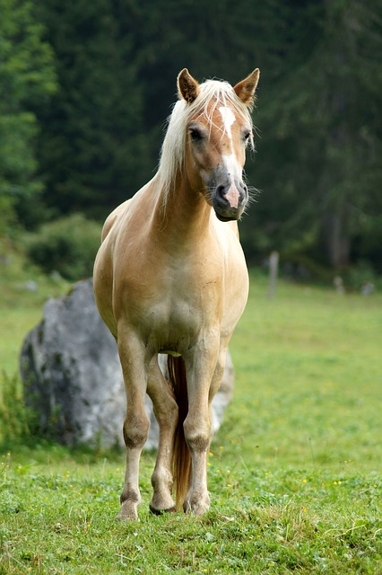 eloigner insectes chevaux